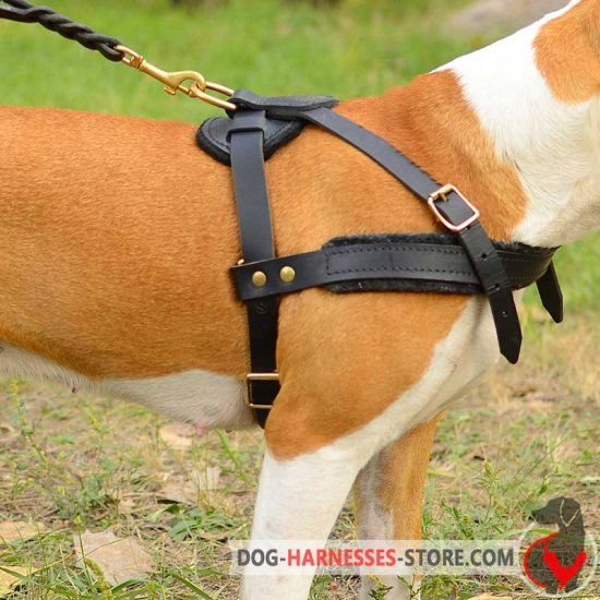 Fantastic Fila Brasileiro Harness for Pulling, Tracking and Walking