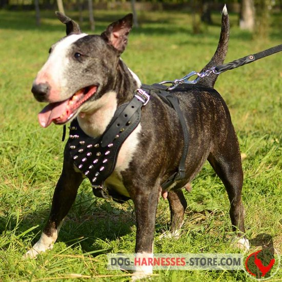 Designer Leather English Bull Terrier Harness with Nickel Spikes