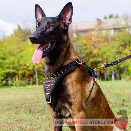 Belgian Malinois Spiked Leather Dog Harness