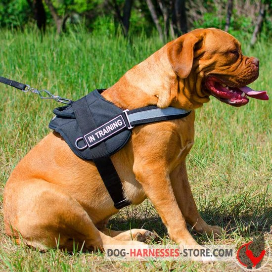 Dogue de Bordeaux Nylon Harness for Police and Service Dogs with Handle