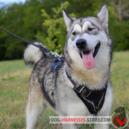 210e22391c873e9bd468dd60a078084e.image.550x550 hand painted barbed wire dog harness for alaskan malamute [h1bw wire dog harness at bayanpartner.co