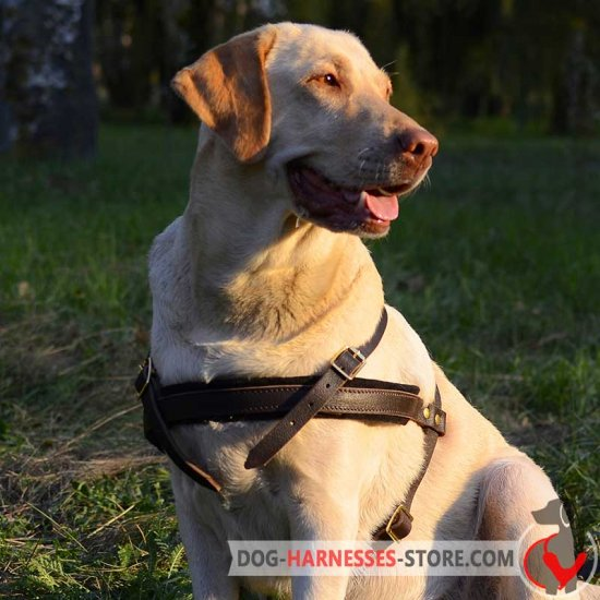 Tracking/Pulling Leather Labrador Retriever Harness