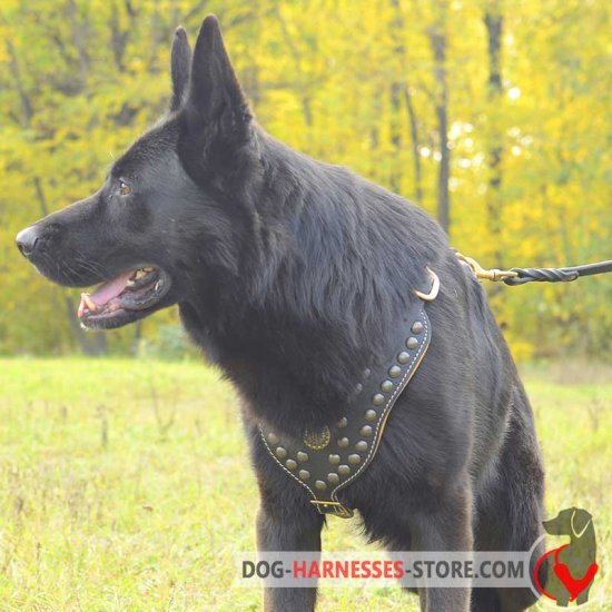 Royal Exclusive Design Studded Leather German Shepherd Harness