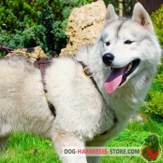 Siberian Husky Handcrafted Dog Harness for Tracking and Walking