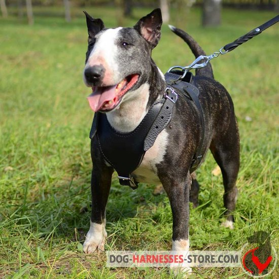 Strong Leather English Bull Terrier Harness for Attack/Agitation Work - Click Image to Close