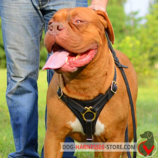 Leather Dogue de Bordeaux Harness with Padded Chest Plate