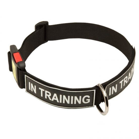 Identifying Nylon Dog Collar with Patches and Quick Release Buckle