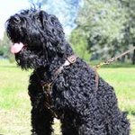 Leather Black Russian Terrier Harness for Tracking and Walking