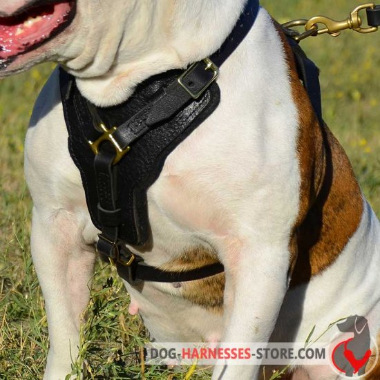 Practical Leather Border Collie Harness for Attack/Agitation Work