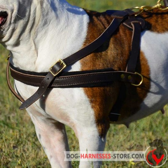Boerboel Mastiff Pulling/Tracking Leather Dog Harness