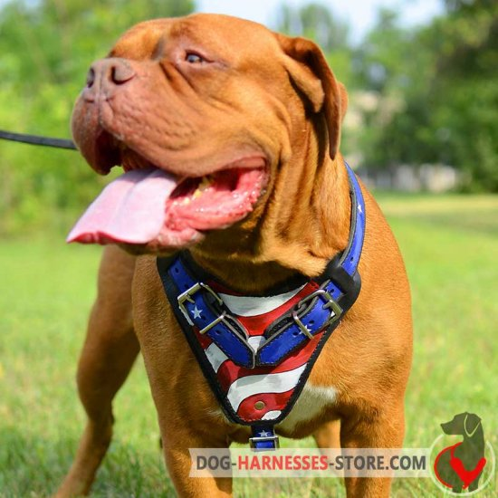 Dogue-de-Bordeaux Handpainted American Pride Leather Harness