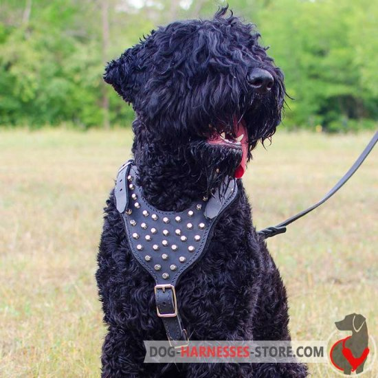 Black Russian Terrier Studded Leather Dog Harness With Pyramids