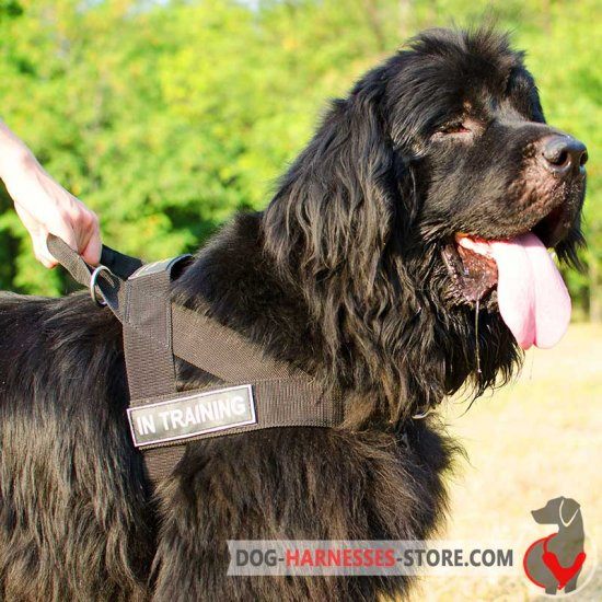 Newfoundland All Weather Nylon Dog Harness