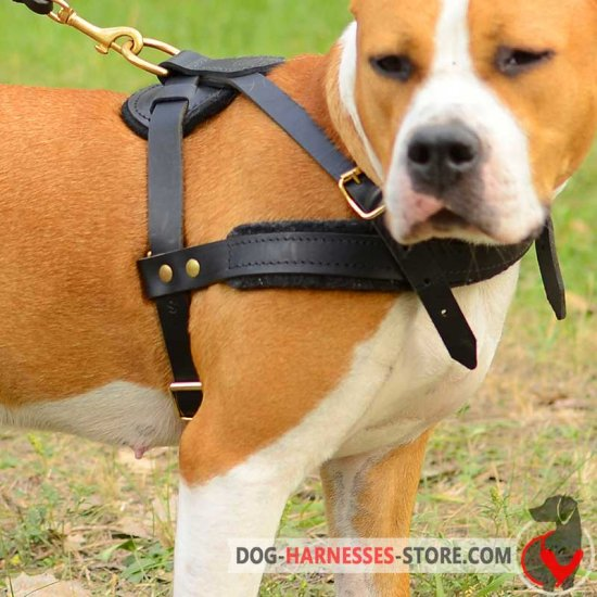Pulling Leather Pyrenean Mastiff Harness