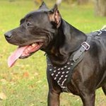 American Pitbull Harness with Spikes