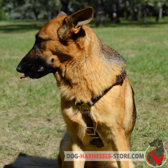 Luxury Handcrafted German Shepherd Harness for Walking and Jogging