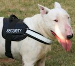 All Weather Reflective English Bull Terrier Harness
