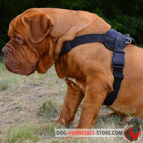 Nylon Multi-Purpose Dogue de Bordeaux Harness for Tracking/Pulling