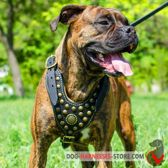 Royal Boxer Harness - Exclusive Design Studded Harness