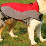 Boxer Nylon Winter Dog Coat for Walking
