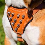 Labrador Luxury Puppy Leather Harness with Spikes