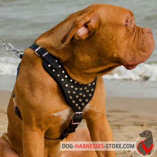 Studded Leather Dogue de Bordeaux Harness for Walking