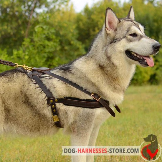 Tracking /Pulling Alaskan Malamute Leather Dog Harness
