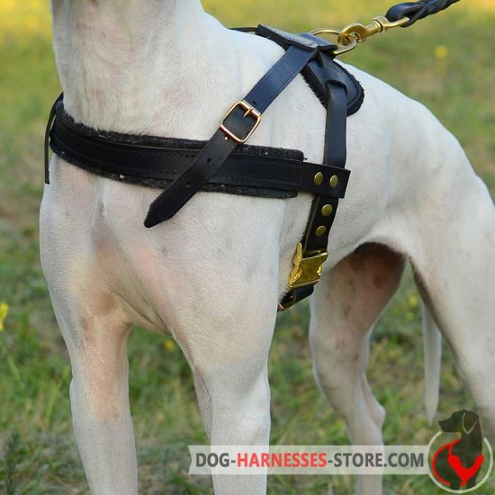 Pulling Leather Dog Harness for Old English Mastiff