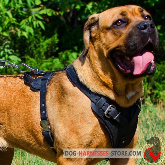 Agitation/Protection Leather Cane Corso Harness