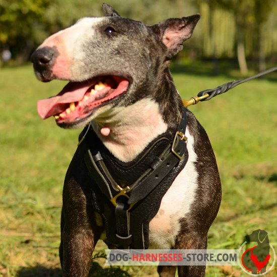 Leather English Bull Terrier Harness for Attack/Agitation/Protection Work