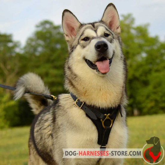 Tracking and Walking Leather Alaskan Malamute Harness