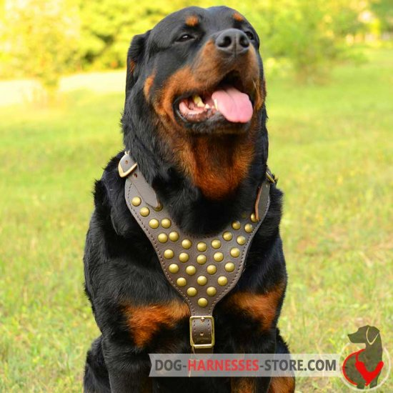 Rottweiler Harness with Studs