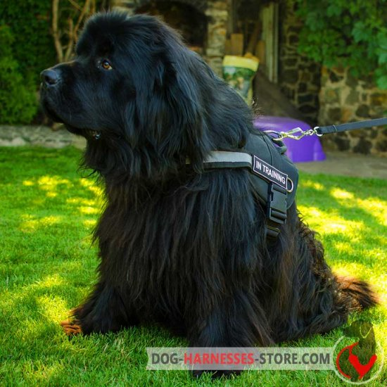 Newfoundland Nylon Dog Harness with Reflective Strap