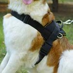 Nylon Wirehaired Pointing Griffon Harness for Pulling/Tracking