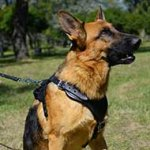Walking/Training Padded German Shepherd Harness