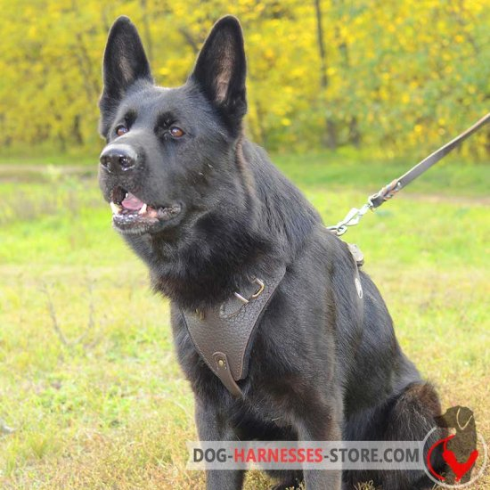 Agitation/Protection Leather German Shepherd Harness for Training