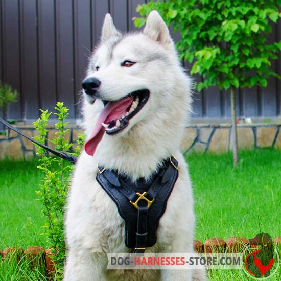 Siberian Husky Exclusive Handcrafted Leather Dog Harness