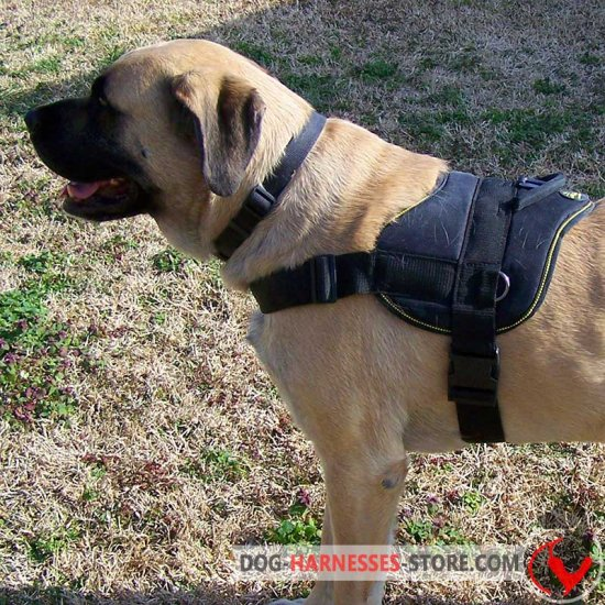 Nylon Pyrenean Mastiff Harness with Handle