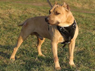 leather dog harness for pibull