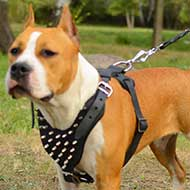 Amstaff-American Staffordshire Terrier Harness Decorated with Spikes