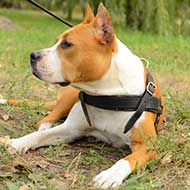 Leather Amstaff Harness for Tracking/Pulling