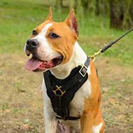 Exclusive Staffordshire Terrier Harness Padded on Chest