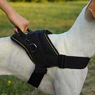 Nylon Argentine Dogo Harness for Pulling/Tracking