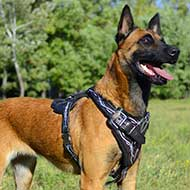 Belgian Malinois Harness with Barbed Wire Design