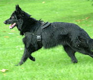 Nylon Belgian Sheepdog Harness for Pulling/Walking/Training