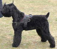Nylon Black Russian Terrier Harness for Walking