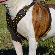 Boerboel Mastiff Studded Dog Harness for Fashionable Walking