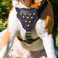 Boxer Designer Walking Leather Harness for Puppy
