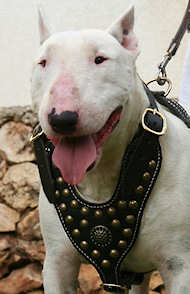 English bull Terrier great leather dog harness- handmade dog harness for BT