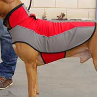 Cane Corso Warm Nylon Winter Dog Coat for Walking